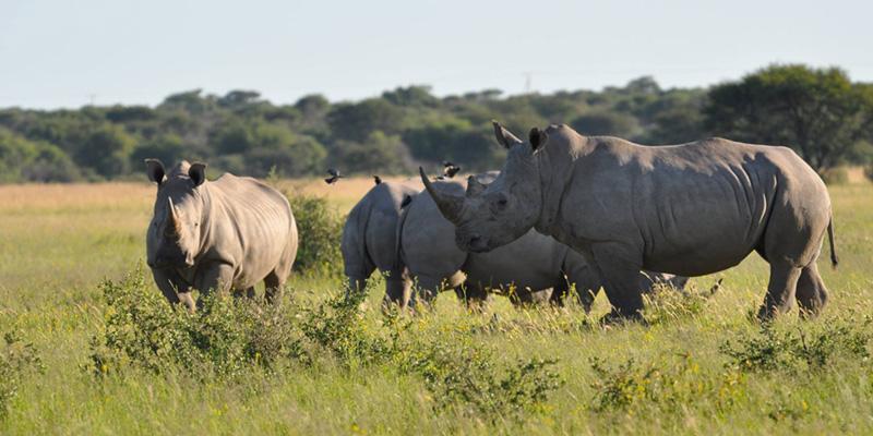 Khama-Rhino-Sanctuary-Intro